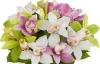 Букеты с орхидеей